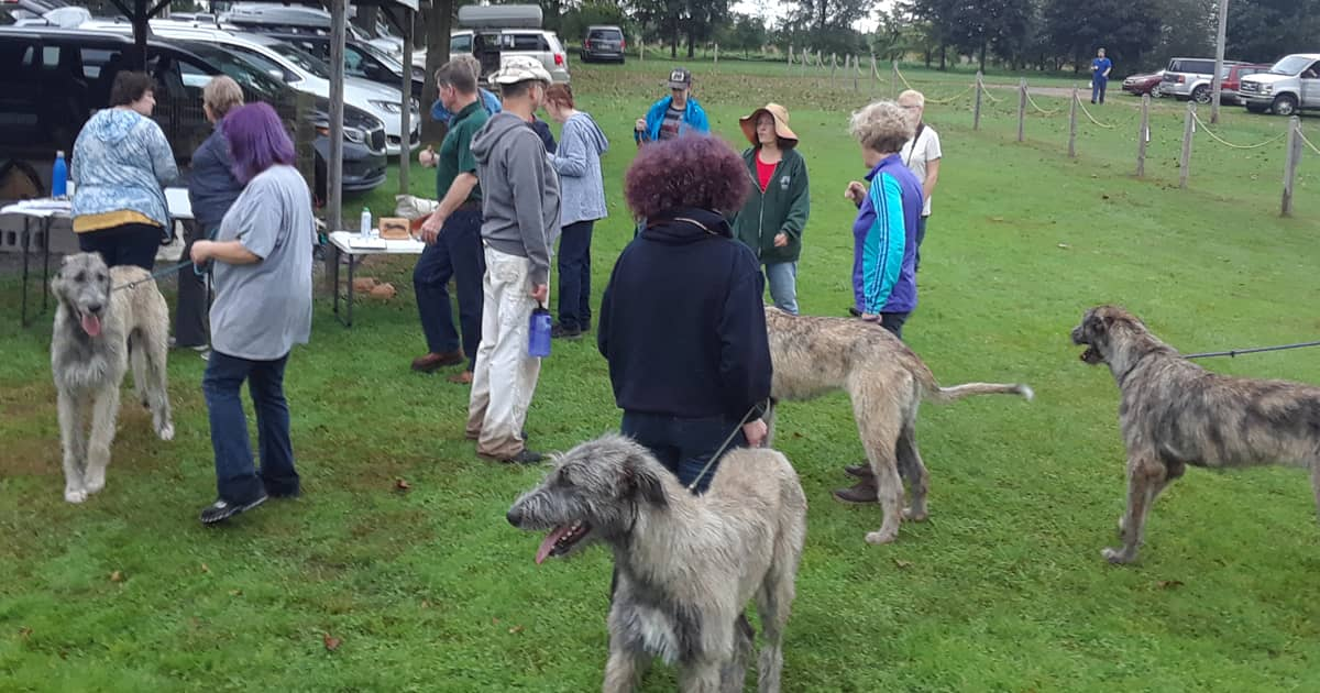 Wolfhounds and their owners at a LGRA event