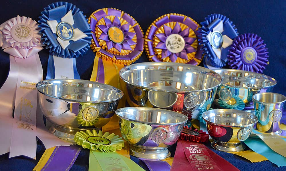 Ribbons and trophies from dog events
